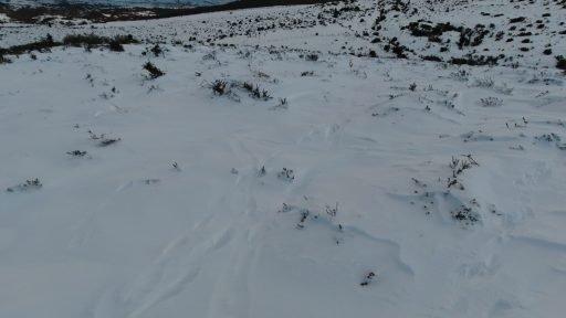 Multitud de pistas de diversos mamíferos (ciervo, corzo, lobo, oso, zorro...)