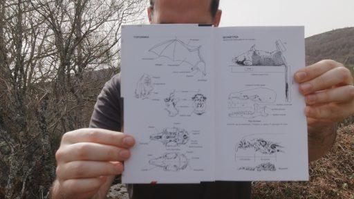 Toponimia y biometría de mamíferos