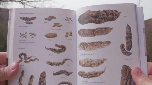 Excrementos de mamíferos de España